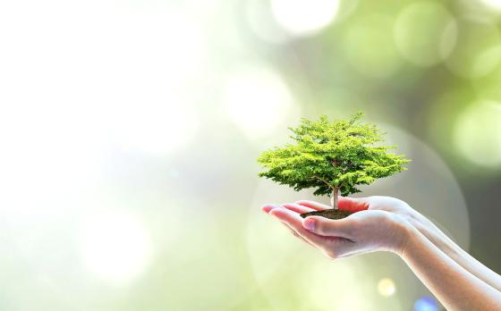 小さな木を手で包んでいる写真